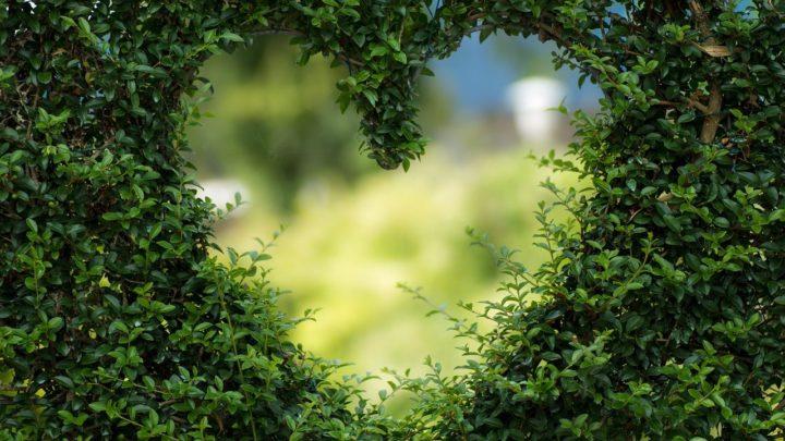 Śliczny oraz porządny ogród to zasługa wielu godzin spędzonych  w jego zaciszu w trakcie jego pielegnacji.